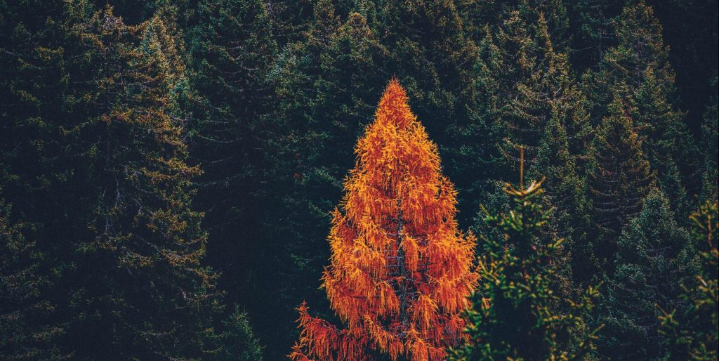 Evergreen content for SEO, withered tree in forest